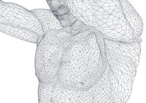 筋肉 ネット状