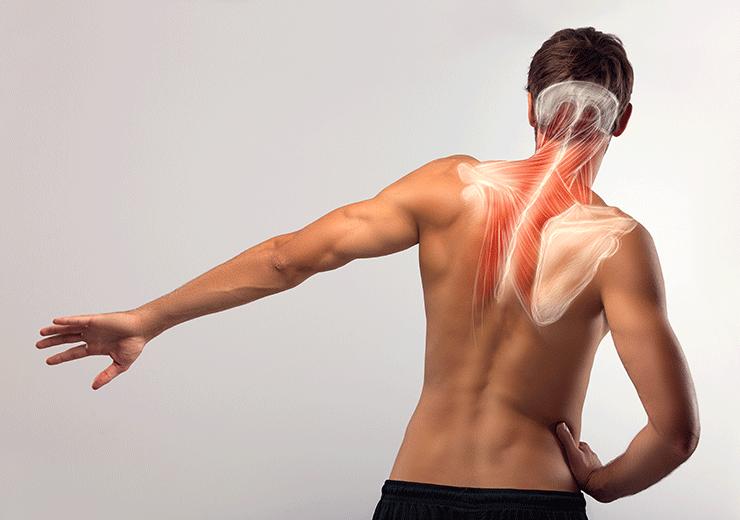 肩甲骨 筋肉